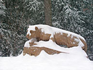 Nittany Lion Shrine in Winter